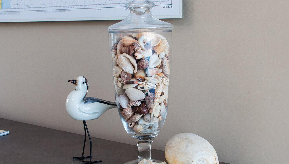 Local seashells