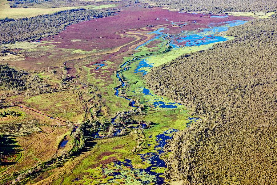 Eubenangee Swamp