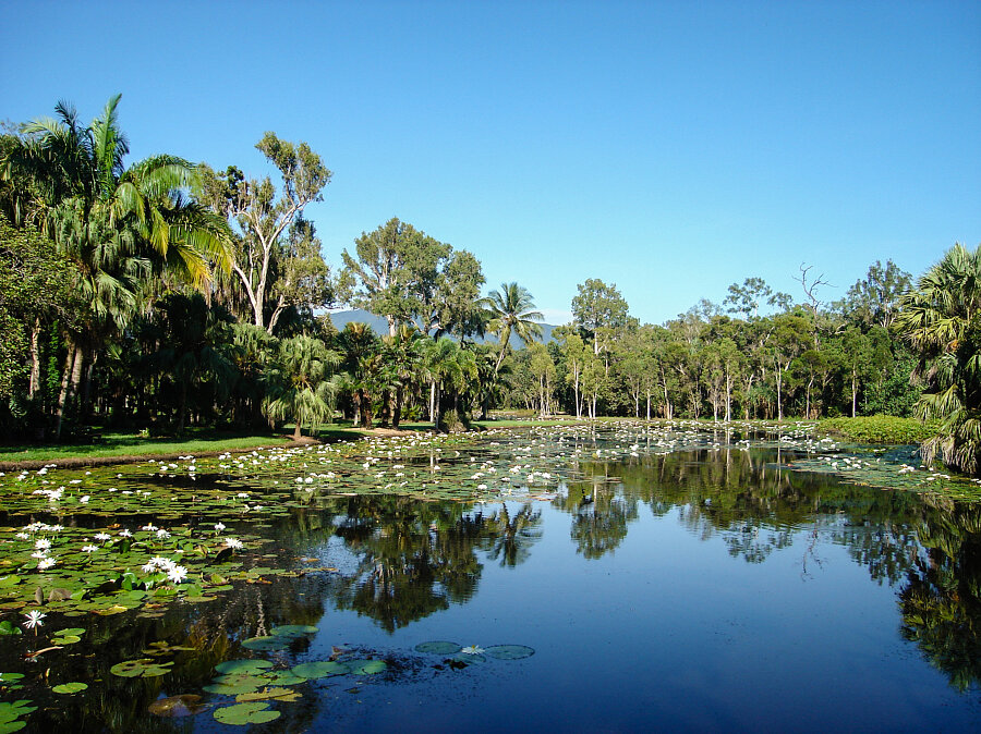 The freshwater water-Lily lake at Cairns Centenary Lakes