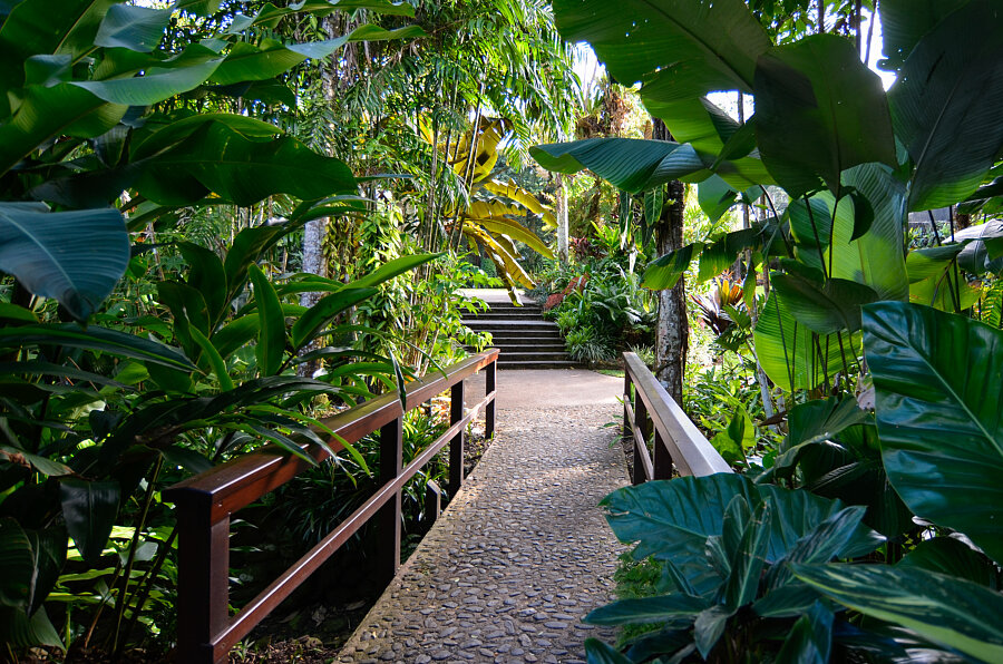 Bridge - start of the Cairns Botanic gardens boardwalk