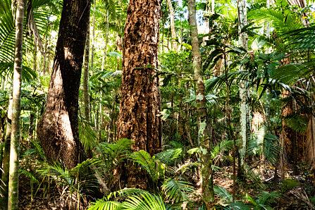 Melaleuca & palms from Cairns Botanic Gardens boardwalk