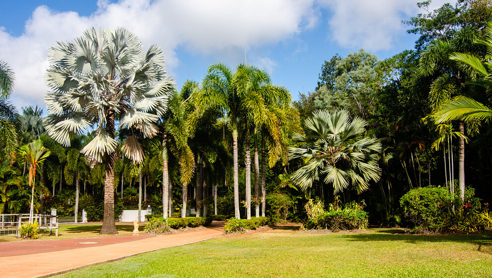 Shanee Prans front lawn and palms
