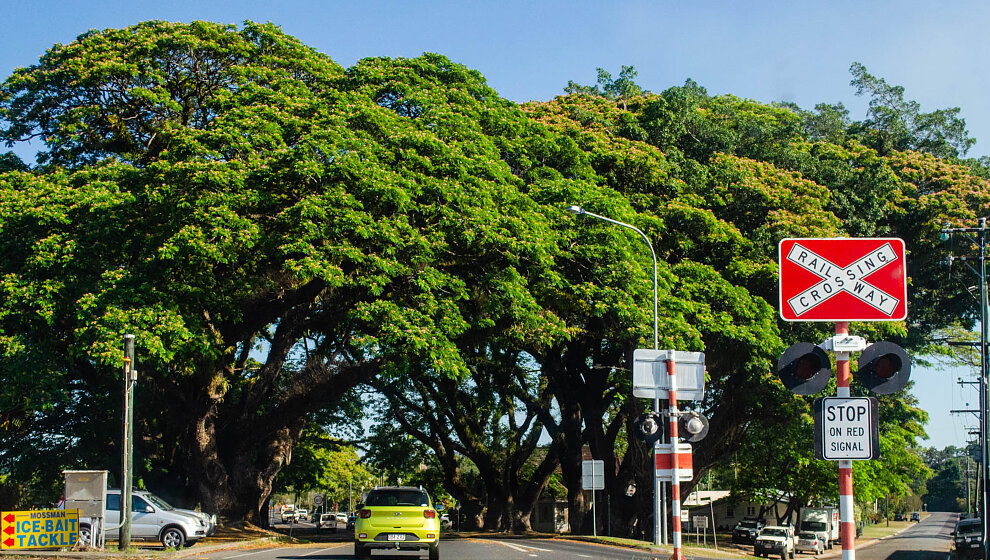 Mossman - Raintrees
