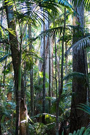 Swamp forest from Cairns Botanic Gardens boardwalk