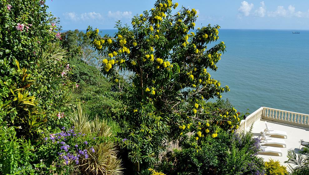 A Villa Gail - Golden Penda flowering