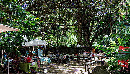 Tanks market day under the Figtree, Cairns